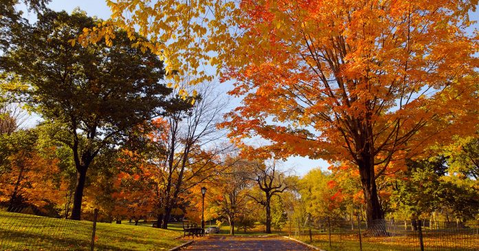 Try This Simple Gratitude Ritual For The Upcoming Fall Equinox