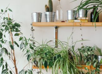 Houseplants Don't Just Look Great — They're Amazing For Your Skin, Too