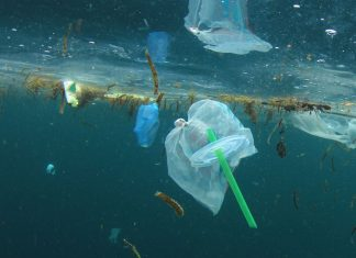 Why Starbucks, Disney, and the EU are all shunning plastic straws