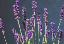 5 Soothing Essential Oils For Winter Blues