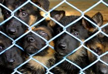The just-signed Farm Bill bans eating cats and dogs