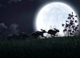 Netflix's new Watership Down proves the beloved children's classic was a horror story all along