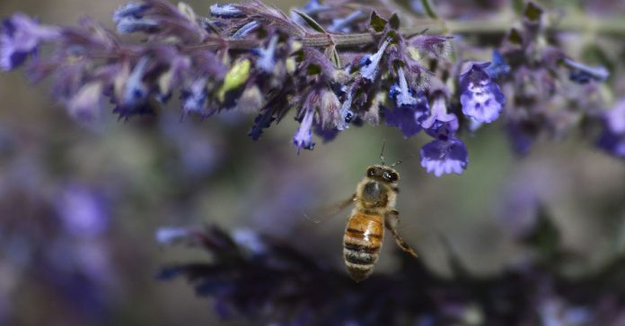 Honeybees can solve basic math problems. Really.