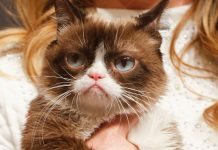 Grumpy Cat Has Died — But Her Memes Will Live On Forever