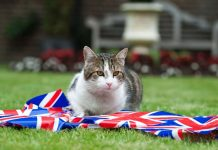 """Larry the Cat, UK's """"chief mouser,"""" causes headache for Trump's security team"""