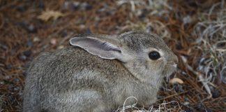 Why Beatrix Potter self-published Peter Rabbit