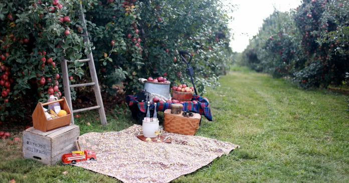 These Airbnb Apple Orchard Rentals Are Giving Us Major Fall Wanderlust