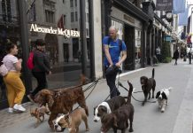The dog-walking startup Wag is exploring a sale