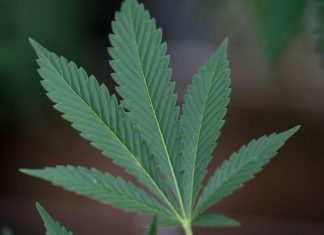 A new study found marijuana legalization leads to more problematic use