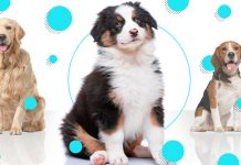 How to choose the perfect dog for you