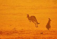 A staggering 1 billion animals are now estimated dead in Australia's fires