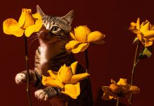 Take A 5-Minute Break To Look At These Delightful Pet Portraits — You Deserve It