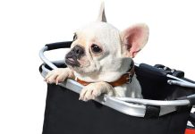 7 Cute Bike Baskets For Holding Your Stuff (From Phones To Pups)