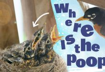 Why bird nests aren't covered in poop, explained to kids