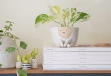 10 Cute Homes For Your Best Plant Pals