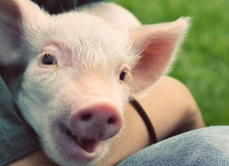 Want to help animals? Here's where to donate your money.