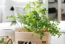 Did You Know Amazon Sells Plants? Here Are 12 That Shoppers Love