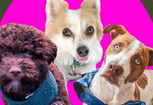 Three New Dog Moms Tested The Best Puppy Products So You Don't Have To