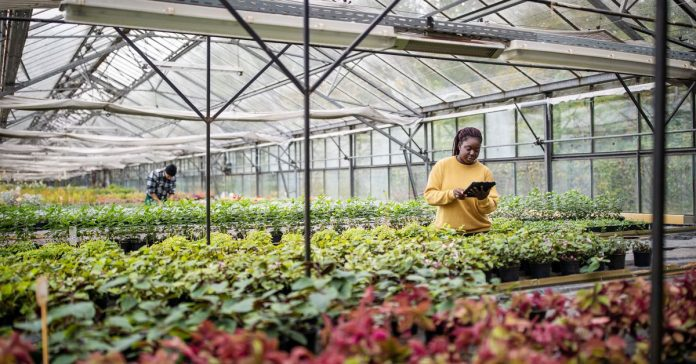 The next generation of Black farmers