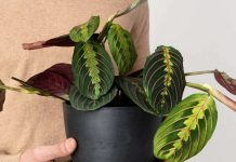 Experts Say These Are The Best, Easiest Indoor Houseplants To Own